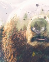 Grizzly bear Forest Double Exposure