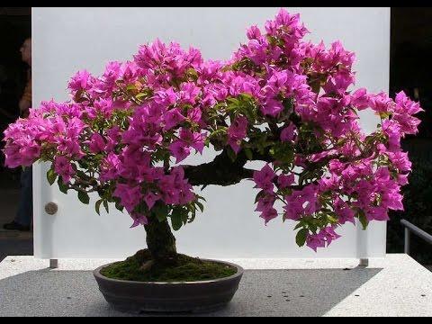 Free bonsai.jpg phone wallpaper by tribeca