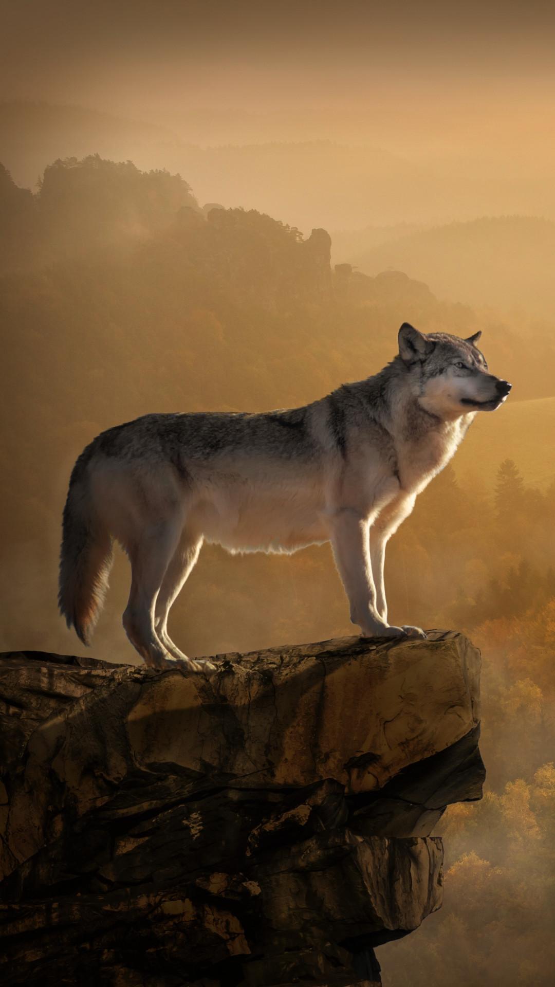 Free Wolf, Rock, Precipice, Predator phone wallpaper by jaguar32