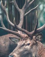 Observing Deer