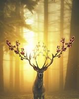 Spring Deer Forest
