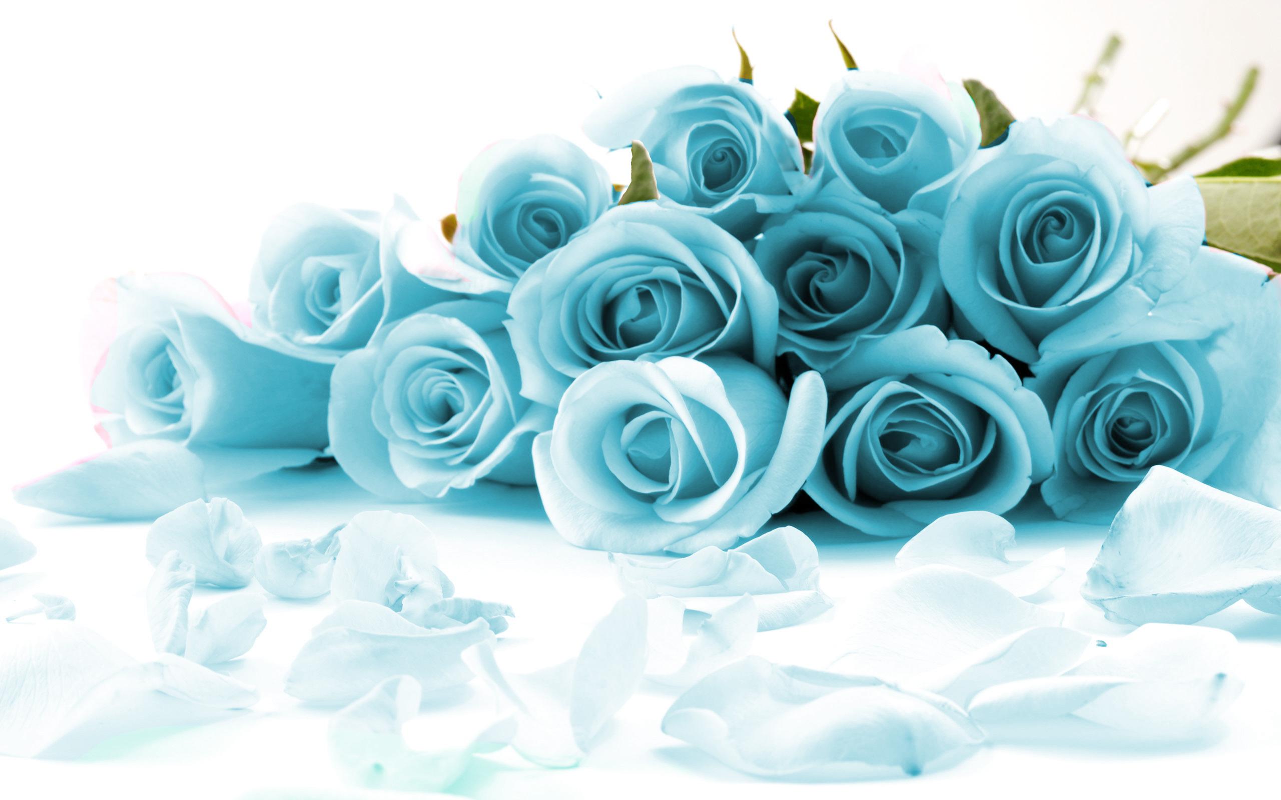 Free Blue-Rose.jpg phone wallpaper by tribeca