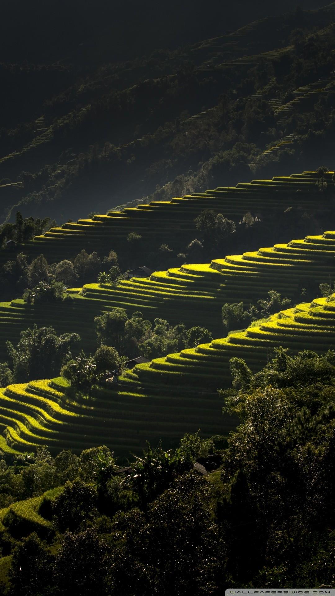 Free Rice Terraces Vietnam phone wallpaper by darkkyra12