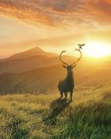 Sunset Deer Mountains