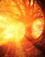 Beautiful Fall Trees, Sun Rays