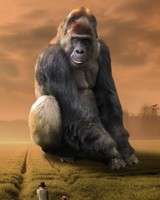 The Giant Gorilla wallpaper 1