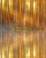 Sunbeams through Forest Trees, Lake Reflection