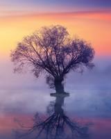 Single Tree, Mist Over Lake