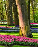 Colorful Spring Gardens, Holland, Netherlands