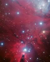 Christmas Tree Cluster Cone Nebula