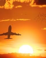 Flight Sunset