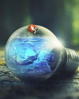 Mermaid in Bulb
