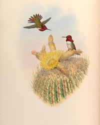 Hummingbird Monograph Art