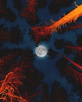 Moon with Campfire in Forest