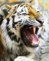 Tiger Splash Art