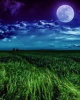 Grass field Moon