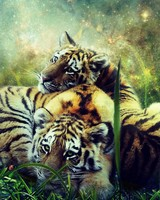 Tigers, cubs, photoshop, wildlife