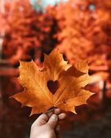 Autumn leaf Love heart