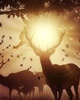 Sunset Deers wallpaper 1
