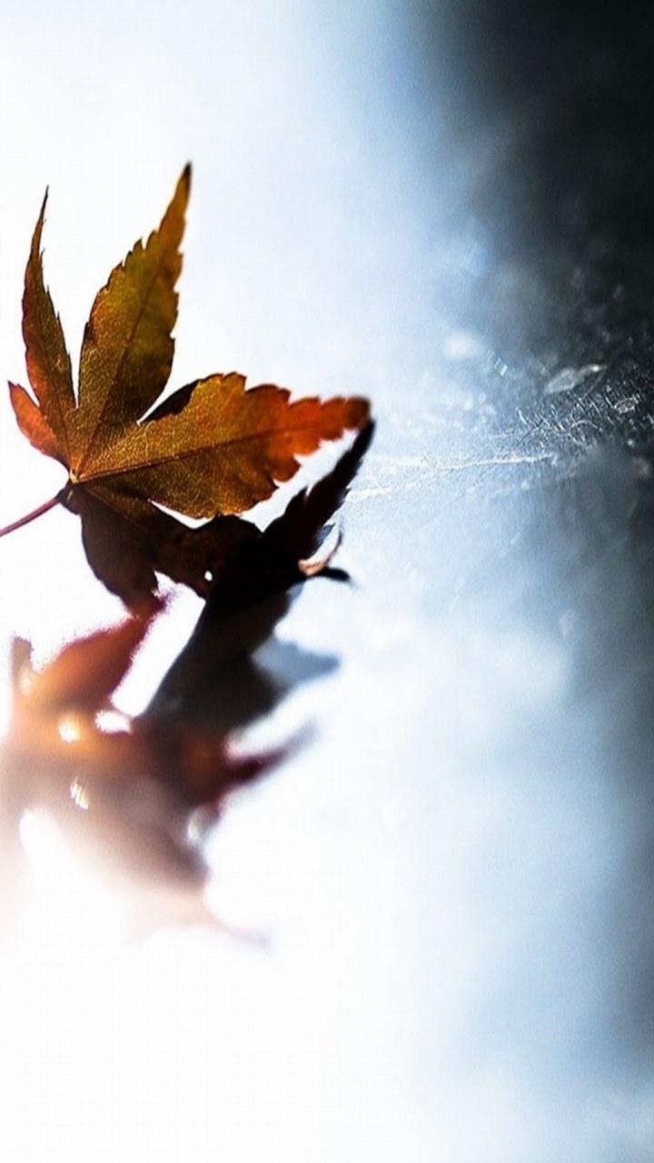 Free Leaf.jpg phone wallpaper by tony__stark