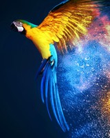 Macaw wallpaper 1