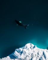 Iceberg & Whale