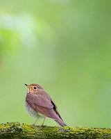 Bird, Branch, Nature