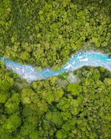Aerial View, Forest Creek, Summer, Nature