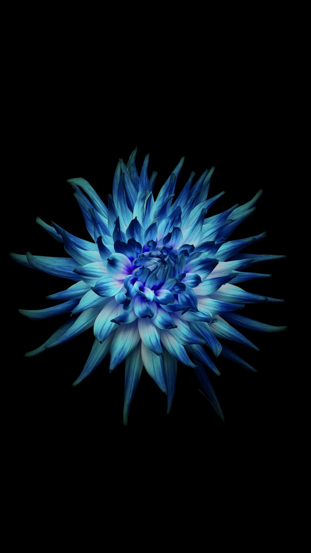 Free Flower in Dark background phone wallpaper by rachelspillane