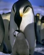 Penguins 02.jpg