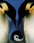 Penguins 03.jpg