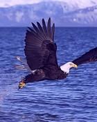 Eagle-01.jpg