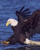 Eagle-02.jpg