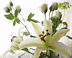 Free Flower - Award Winning Photographs.jpg phone wallpaper by iamlal2
