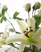 Flower - Award Winning Photographs.jpg