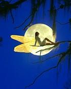In Thr Moon.jpg