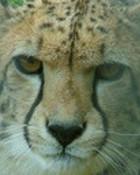 Exmoor Zoo 11-04-2007 #097