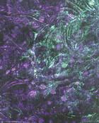 VG Violet Bluegreen.jpg