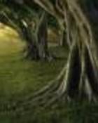 arboles.jpg