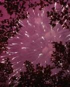 fireworks-2001a.JPG