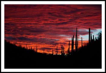 Free sabino-canyon-sunset-pink-led.jpg phone wallpaper by jslama