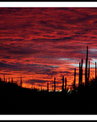 sabino-canyon-sunset-pink-led.jpg