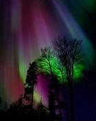 northern_lights_trees_1228_04.jpg