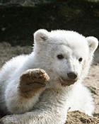 Knut 3