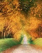 fall1.jpg wallpaper 1