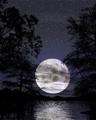 silentnight2.jpg