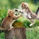 Free Kittens phone wallpaper by ergohg2