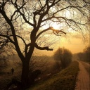 Free 93-Tree phone wallpaper by iamlal2