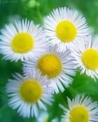flowers_b7a2tqhl.jpg