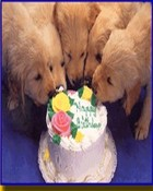 puppies and cake